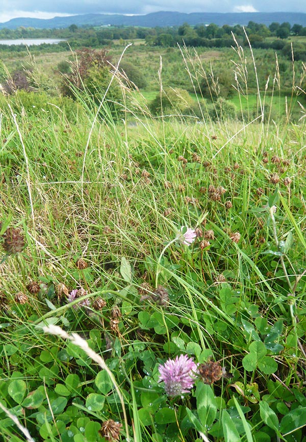 Clover Green Roof Planning