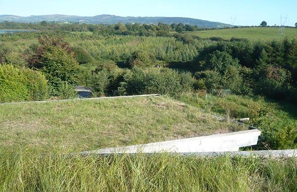 Eco Architect Grass Roof