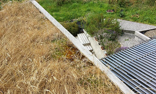 Eco House Grass Roof
